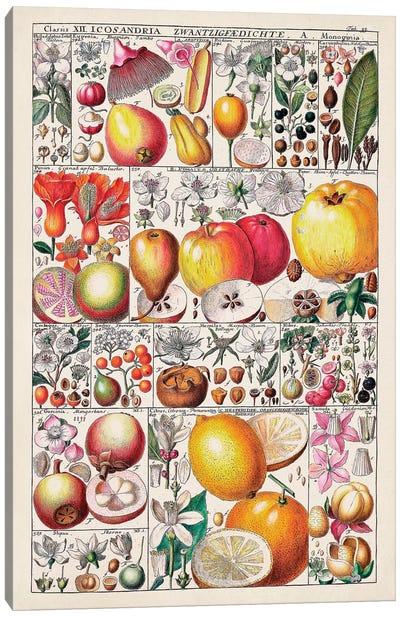 Fruit Chart Canvas Art Print