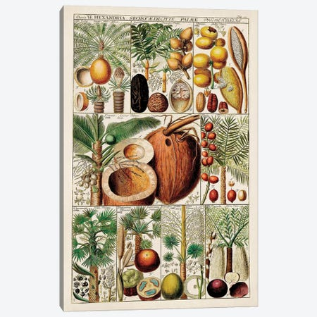 Palm Tree Chart Canvas Print #VSN588} by Vision Studio Canvas Art Print