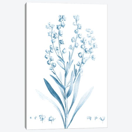 Antique Botanical in Blue I Canvas Print #VSN600} by Vision Studio Canvas Art