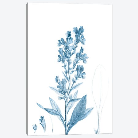 Antique Botanical in Blue III Canvas Print #VSN602} by Vision Studio Canvas Art