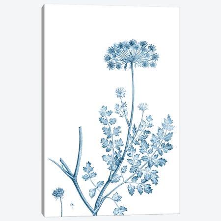 Antique Botanical in Blue V Canvas Print #VSN605} by Vision Studio Art Print