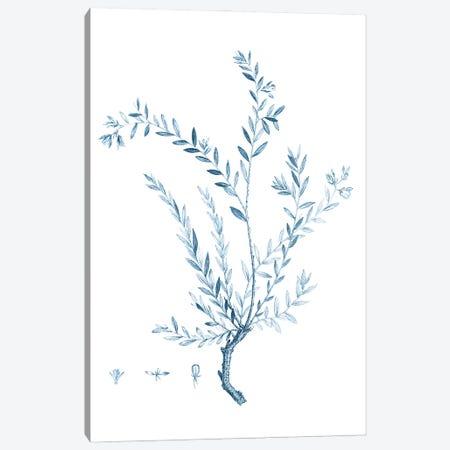 Antique Botanical in Blue VII Canvas Print #VSN607} by Vision Studio Canvas Art Print