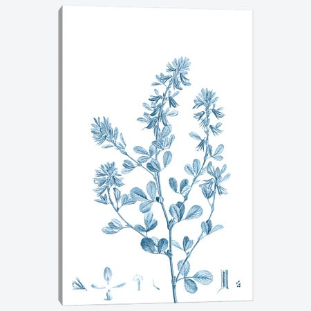 Antique Botanical in Blue VIII 3-Piece Canvas #VSN608} by Vision Studio Canvas Wall Art