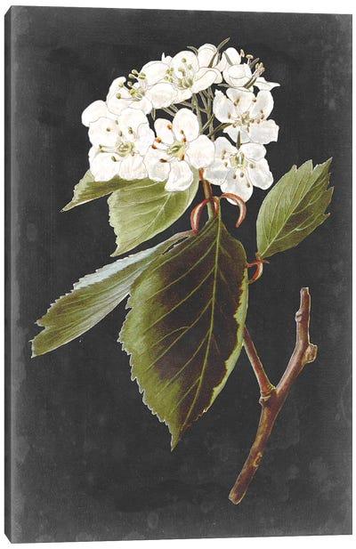 Dramatic White Flowers I Canvas Art Print