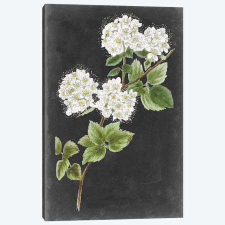 Dramatic White Flowers II Canvas Print #VSN610} by Vision Studio Art Print