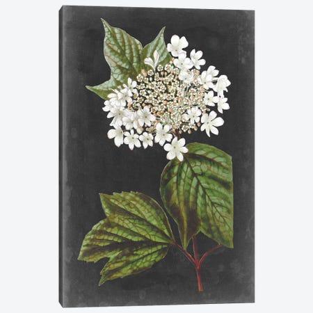 Dramatic White Flowers III Canvas Print #VSN611} by Vision Studio Canvas Art Print