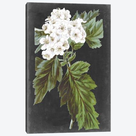 Dramatic White Flowers IV 3-Piece Canvas #VSN612} by Vision Studio Canvas Art Print