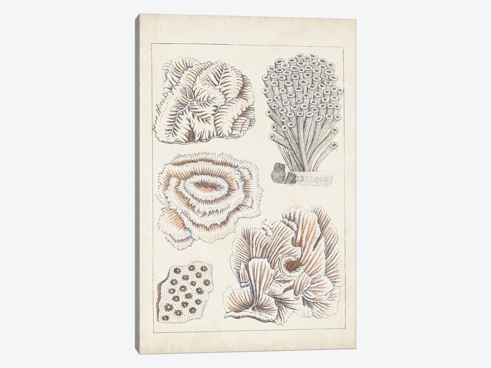 Antique White Coral I by Vision Studio 1-piece Art Print