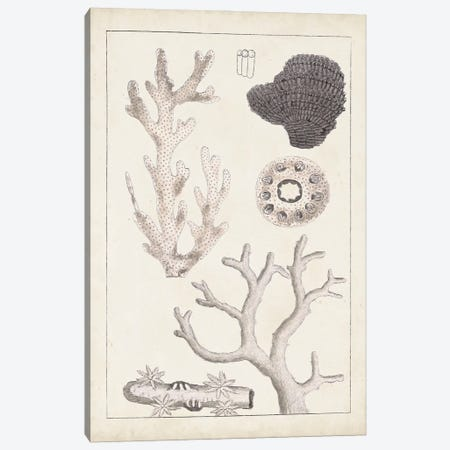Antique White Coral II Canvas Print #VSN614} by Vision Studio Canvas Wall Art