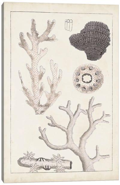 Antique White Coral II Canvas Art Print