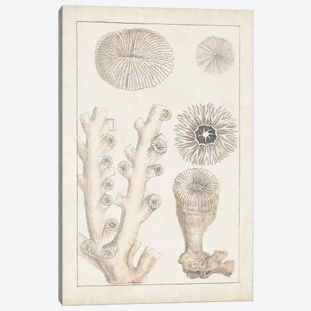 Antique White Coral III Canvas Print #VSN615} by Vision Studio Canvas Art