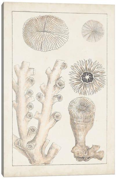 Antique White Coral III Canvas Art Print
