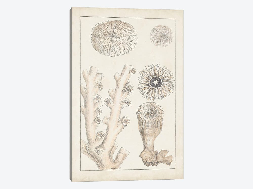 Antique White Coral III by Vision Studio 1-piece Canvas Print