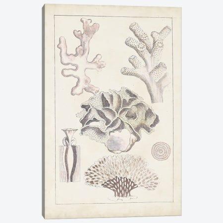 Antique White Coral IV Canvas Print #VSN616} by Vision Studio Canvas Art
