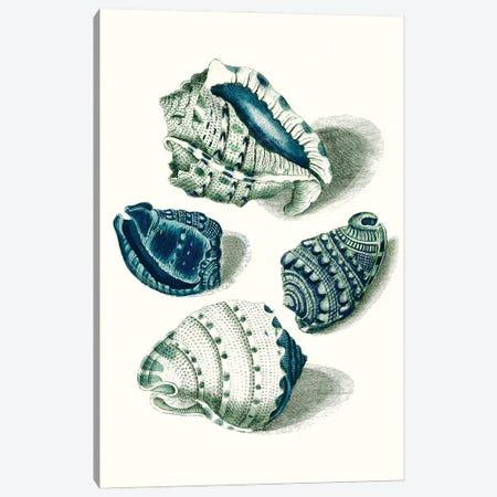 Celadon Shells I Canvas Print #VSN617} by Vision Studio Canvas Artwork