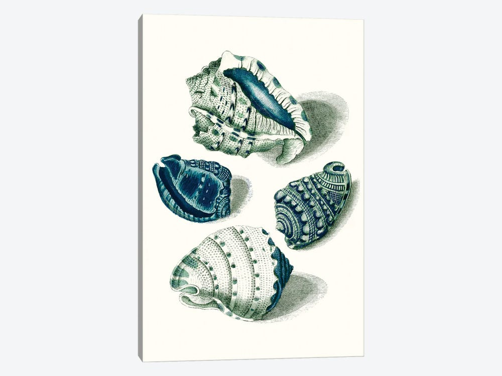 Celadon Shells I by Vision Studio 1-piece Canvas Print