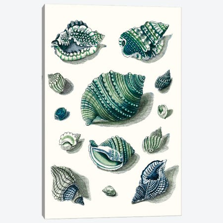 Celadon Shells II Canvas Print #VSN618} by Vision Studio Canvas Art Print