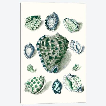 Celadon Shells III Canvas Print #VSN619} by Vision Studio Canvas Print