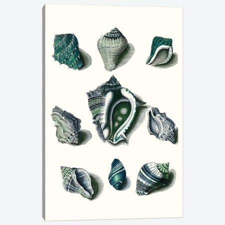 Celadon Shells IV Canvas Print #VSN620} by Vision Studio Canvas Art