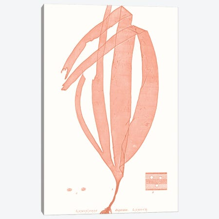 Vivid Coral Seaweed I Canvas Print #VSN623} by Vision Studio Canvas Art
