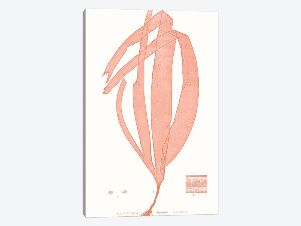 Vivid Coral Seaweed I by Vision Studio 1-piece Canvas Artwork