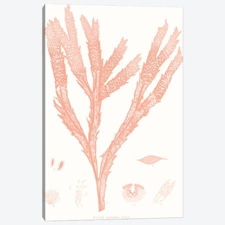 Vivid Coral Seaweed II Canvas Print #VSN624} by Vision Studio Canvas Art Print