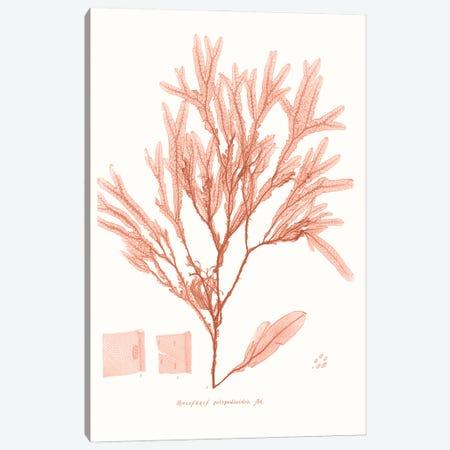 Vivid Coral Seaweed V Canvas Print #VSN627} by Vision Studio Art Print