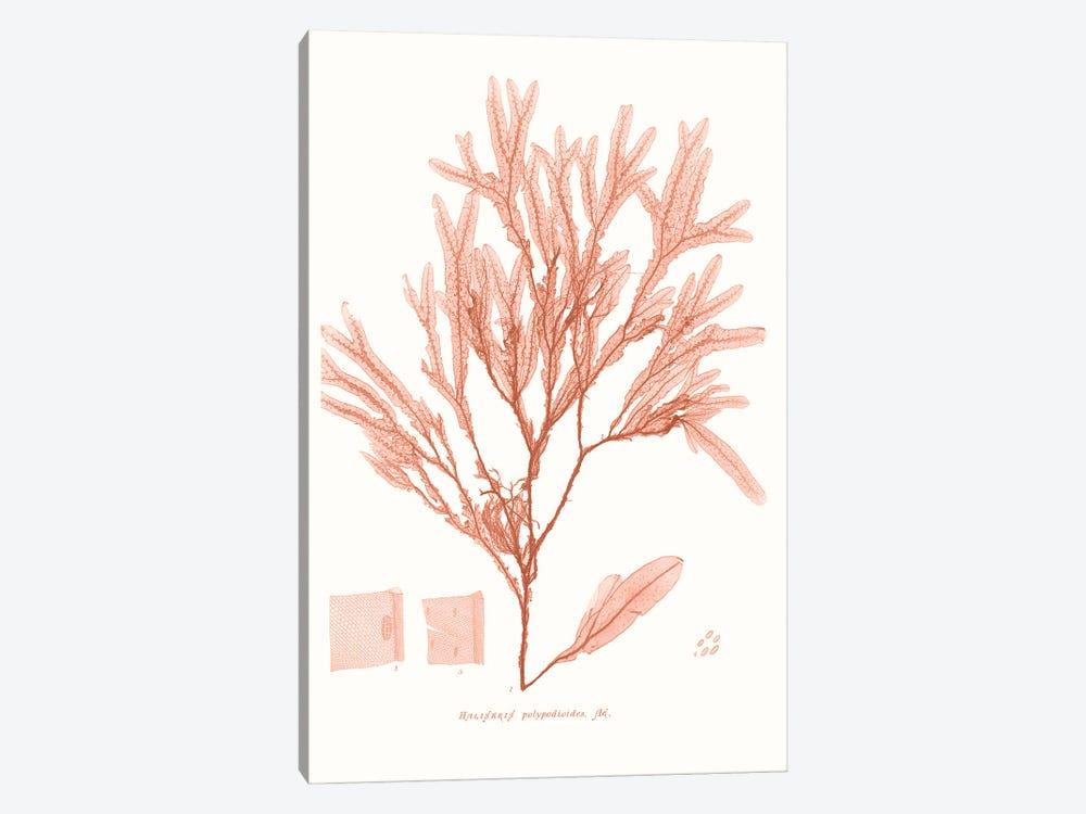 Vivid Coral Seaweed V by Vision Studio 1-piece Canvas Wall Art