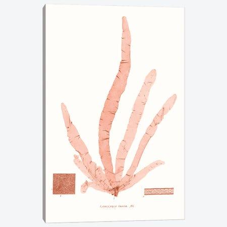 Vivid Coral Seaweed VI Canvas Print #VSN628} by Vision Studio Canvas Artwork