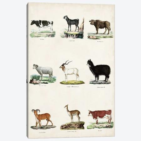 Antique Animal Chart II Canvas Print #VSN631} by Vision Studio Canvas Print