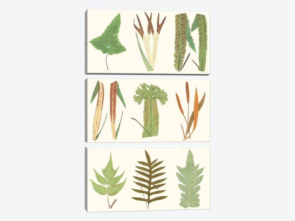 Antique Fern Chart by Vision Studio 3-piece Canvas Wall Art