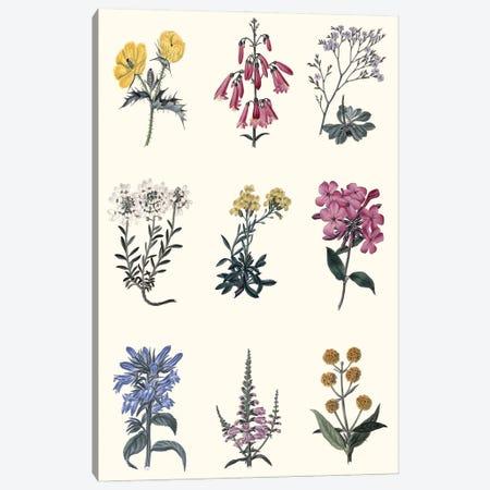 Antique Floral Chart Canvas Print #VSN633} by Vision Studio Art Print