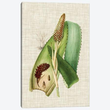 Elegant Tropicals I Canvas Print #VSN63} by Vision Studio Canvas Art