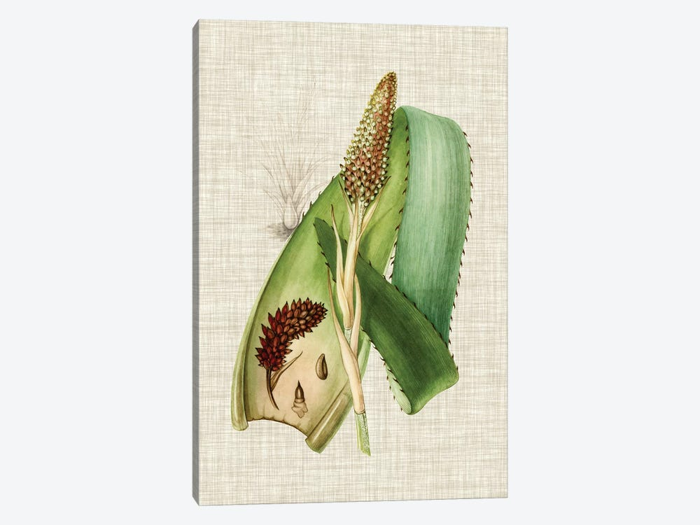 Elegant Tropicals I by Vision Studio 1-piece Canvas Print