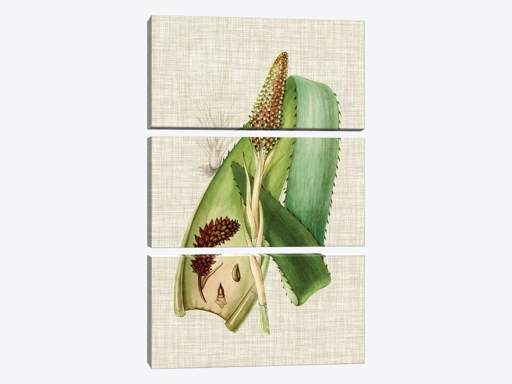 Elegant Tropicals I 3-piece Art Print
