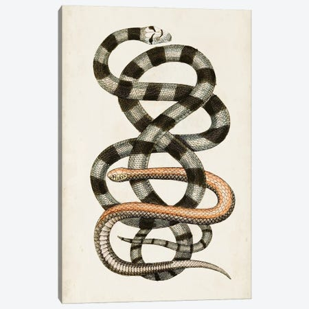 Antique Snakes I Canvas Print #VSN642} by Vision Studio Canvas Art
