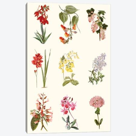 Botanical Array Chart Canvas Print #VSN644} by Vision Studio Canvas Print