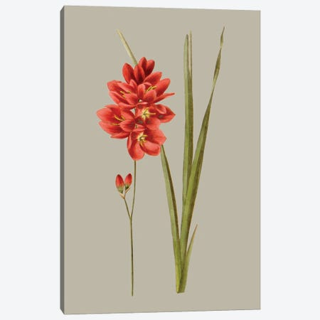 Botanical Array IV Canvas Print #VSN645} by Vision Studio Canvas Art Print