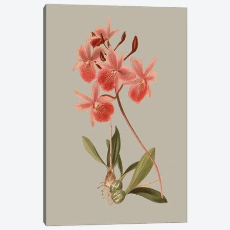 Botanical Array IX Canvas Print #VSN646} by Vision Studio Canvas Art Print