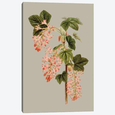 Botanical Array V Canvas Print #VSN647} by Vision Studio Canvas Art Print