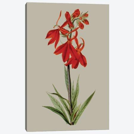 Botanical Array VII Canvas Print #VSN648} by Vision Studio Canvas Wall Art