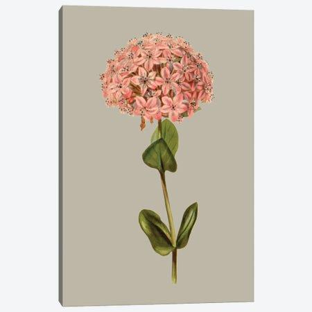 Botanical Array VIII Canvas Print #VSN649} by Vision Studio Canvas Artwork