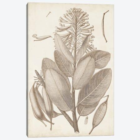 Sepia Exotic Plants I Canvas Print #VSN659} by Vision Studio Canvas Print