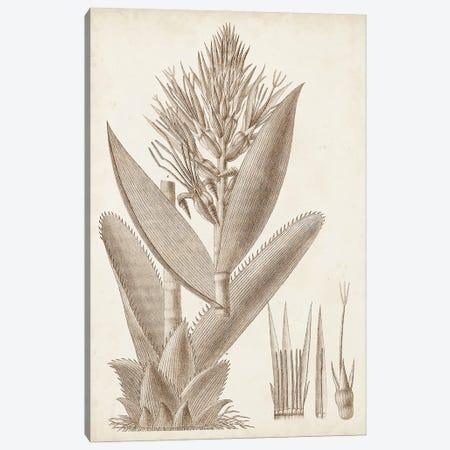 Sepia Exotic Plants II Canvas Print #VSN660} by Vision Studio Canvas Art