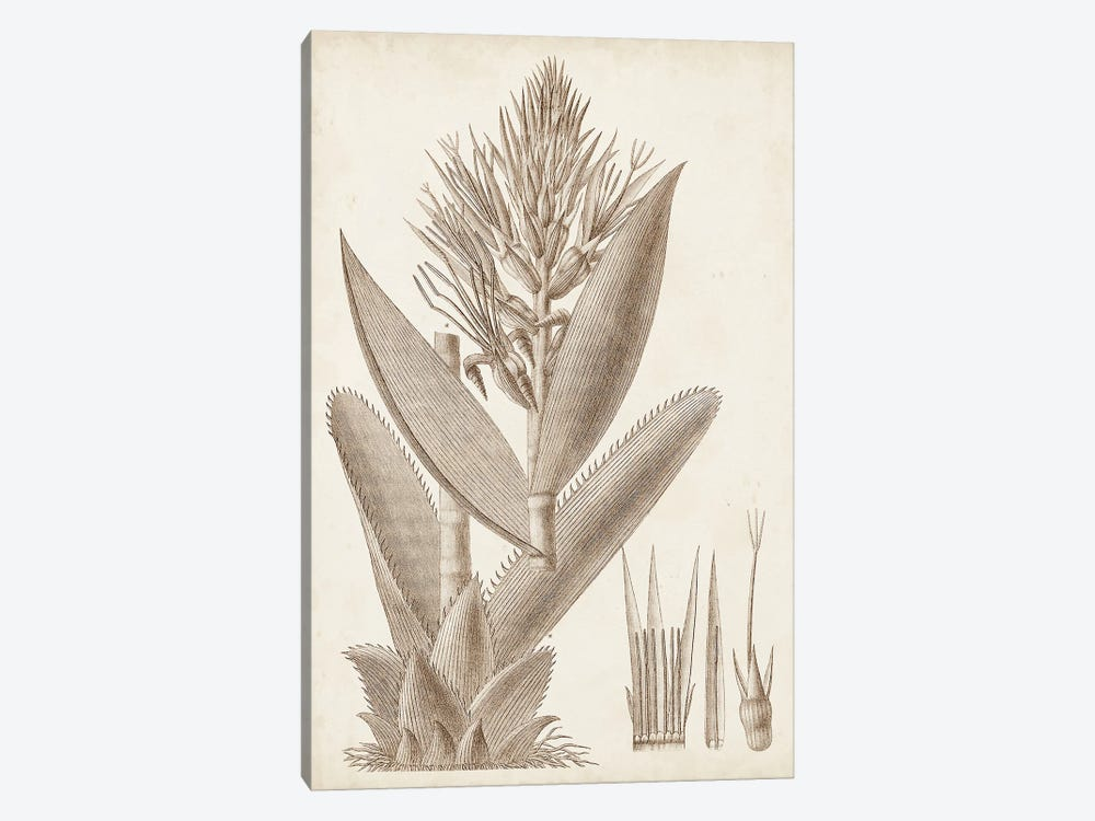 Sepia Exotic Plants II by Vision Studio 1-piece Canvas Print