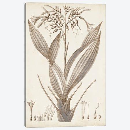 Sepia Exotic Plants VII Canvas Print #VSN661} by Vision Studio Canvas Wall Art