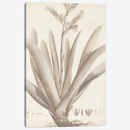 Sepia Exotic Plants VIII Canvas Print #VSN662} by Vision Studio Canvas Wall Art