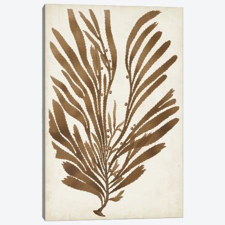 Sepia Seaweed II Canvas Print #VSN664} by Vision Studio Canvas Art Print