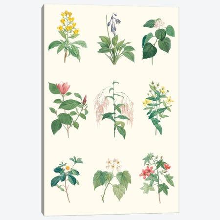 Soft Botanical Chart Canvas Print #VSN666} by Vision Studio Art Print