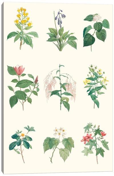 Soft Botanical Chart Canvas Art Print